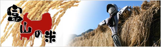 富山のお米|ヤマトライス